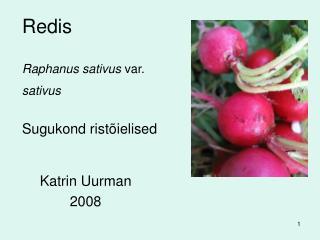Redis Raphanus sativus  var.  sativus Sugukond ristõielised