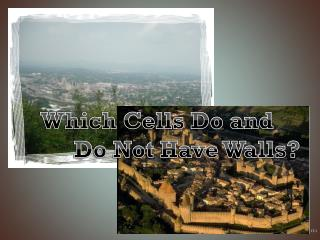 Which Cells Do and          Do Not Have Walls?