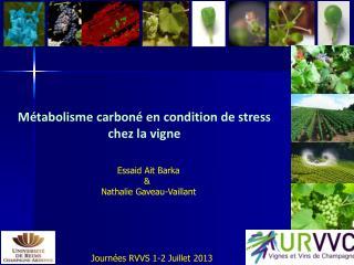 M�tabolisme carbon� en condition de stress chez la vigne