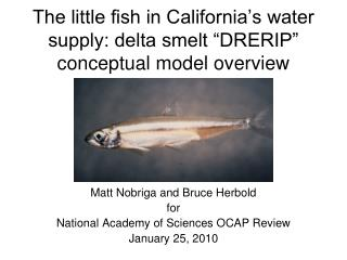 "The little fish in California's water supply: delta smelt ""DRERIP"" conceptual model overview"