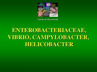 ENTEROBACTERIACEAE,  VIBRIO, CAMPYLOBACTER,   HELICOBACTER