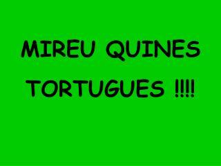 MIREU QUINES TORTUGUES !!!!