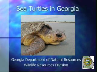 Sea Turtles in Georgia