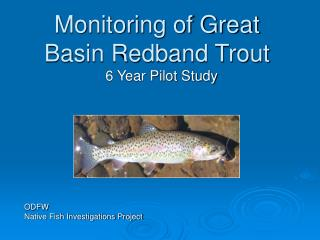 Monitoring of Great Basin Redband Trout
