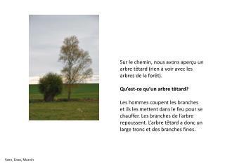 Sur le chemin, nous avons aperçu un arbre têtard (rien à voir avec les arbres de la forêt).