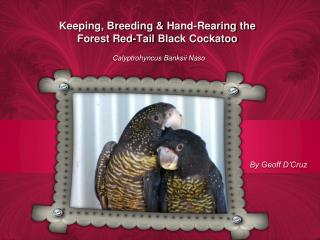 Keeping, Breeding &  Hand-Rearing  the  Forest  Red-Tail  Black Cockatoo
