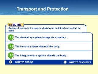 Transport and Protection