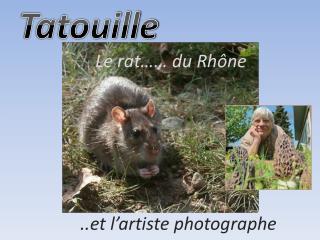 Le rat…… du Rhône