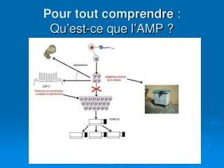 Pour tout comprendre  : Qu'est-ce que l'AMP ?