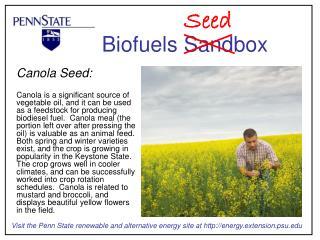 Canola Seed: