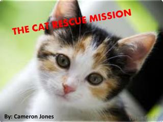 THE CAT RESCUE MISSION