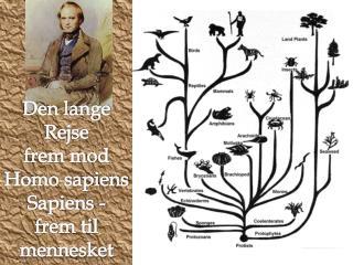 Den lange Rejse frem mod Homo sapiens Sapiens - frem til mennesket