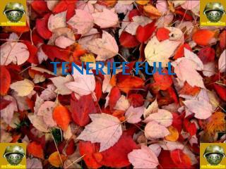 TENERIFE FULL