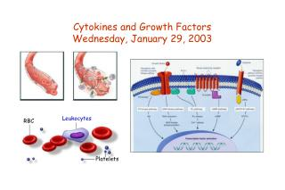 Cytokines and Growth Factors Wednesday, January 29, 2003