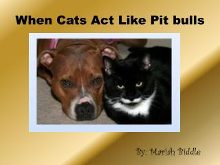 When Cats Act Like Pit bulls