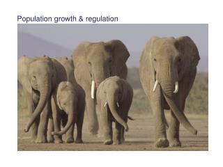 Population growth  regulation