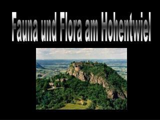 Fauna und Flora am Hohentwiel