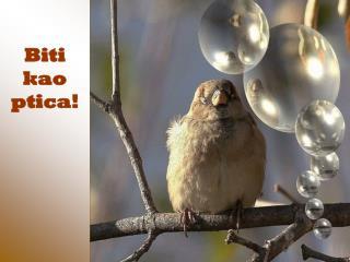 Biti kao ptica!