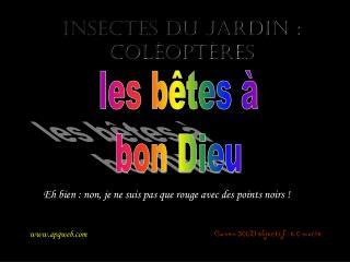 Insectes du jardin : coléoptères
