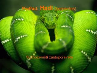 Podřád:  Hadi  (serpentes)