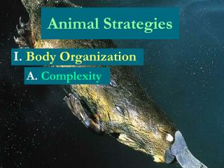 Animal Strategies