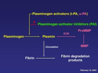 Plasmin