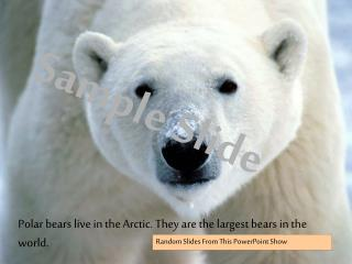 Polar bears live in the Arctic. They are the largest bears in the world.