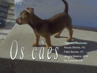 Trabalho Realizado: Ancuta Sfechis, nº2 Fábio Barreto, nº7 Jéssica Madeira, nº10 Da Turma do 5ºB