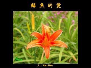 文   :  Alex Hsu