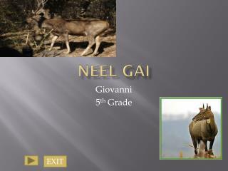 Neel  Gai