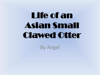 Life of an Asian Small Clawed Otter