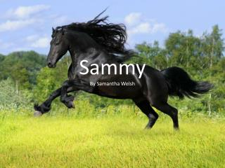 Sammy By Samantha Welsh