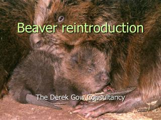 Beaver reintroduction