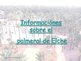 Informaciónes sobre el  palmeral de Elche