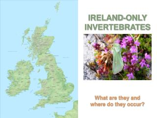 IRELAND-ONLY INVERTEBRATES