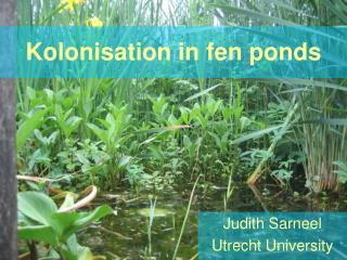 Kolonisation in fen ponds