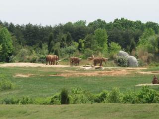 Week 12 Zoos