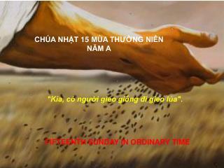 CHÚA NHẬT 15 MÙA THƯỜNG NIÊN NĂM A