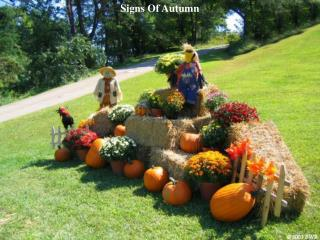 Signs Of Autumn