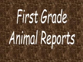First Grade Animal Reports
