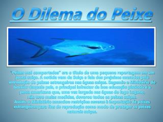 O Dilema do Peixe