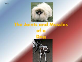 The Joints and Muscles of a Dog