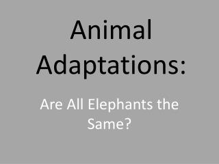 Animal Adaptations: