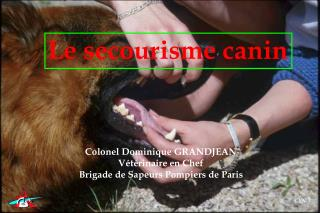 Le secourisme canin