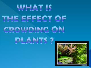WHAT IS  THE EFFECT OF  CROWDING  ON  PLANTS ?