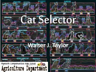 Cat Selector