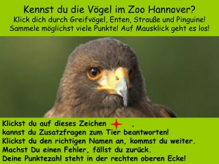 Kennst du die V gel im Zoo Hannover Klick dich durch Greifv gel, Enten, Strau e und Pinguine Sammele m glichst viele Pun