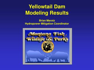 Yellowtail Dam Modeling Results  Brian Marotz Hydropower Mitigation Coordinator