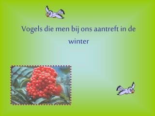 Vogels die men bij ons aantreft in de winter