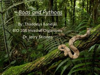 Boas and Pythons